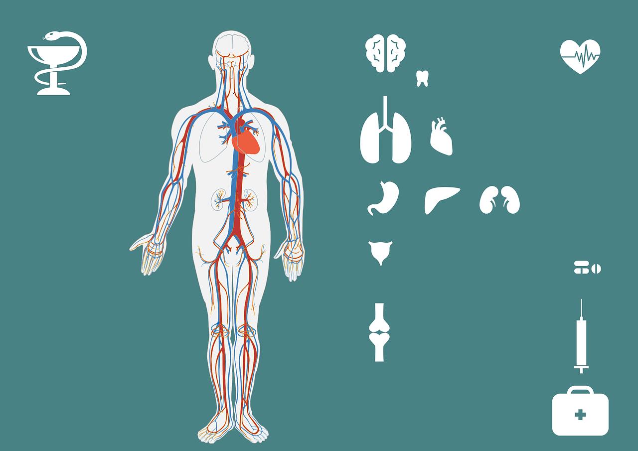 חלקי גוף